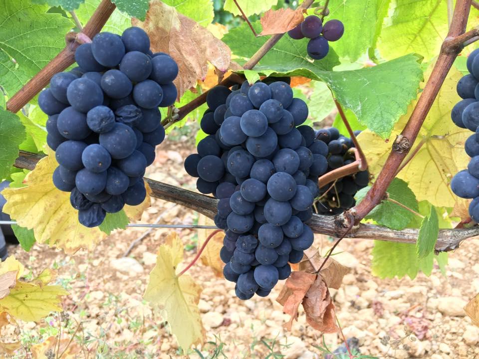 ブルゴーニュと自然派ワイン(4)